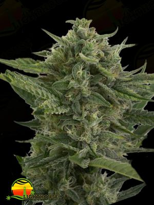 Reek'n Auto (Devil's Harvest Seeds)