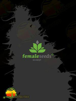 Indoor Mix (Female Seeds)