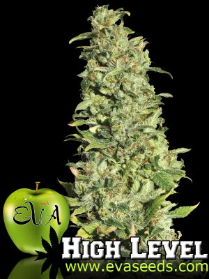 High Level Feminised Seeds