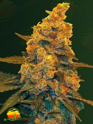 Blow Dream Auto (Victory Seeds)