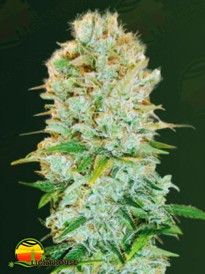 Critical (Victory Seeds)