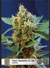 Cream Mandarine XL Auto Feminised Seeds