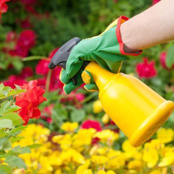 Plant verzorging