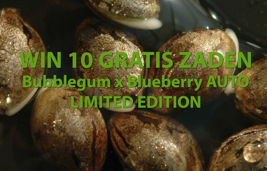 Win 10 gratis bubblegum x blueberry auto zaden