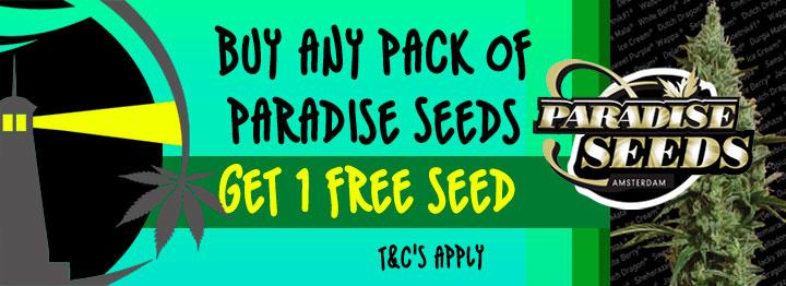 Paradise Seeds Free Seed Promotion
