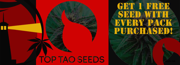 Top Tao Seeds Free Seed Promotion